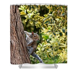 Shower Curtain featuring the photograph Squirrel by Kate Brown
