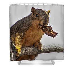 Squirrel Lunch Time Shower Curtain by Robert Bales