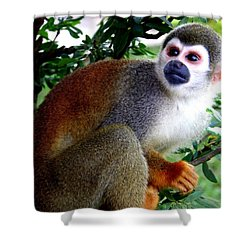 Shower Curtain featuring the photograph Squirrel Monkey by Laurel Talabere