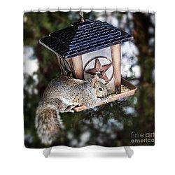 Squirrel On Bird Feeder Shower Curtain by Elena Elisseeva