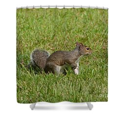 Shower Curtain featuring the photograph Squirrel On Point by Bob Sample