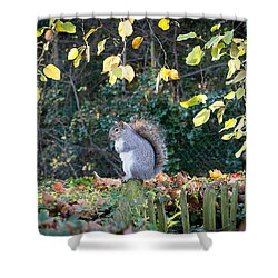 Squirrel Perched Shower Curtain by Matt Malloy