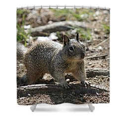 Squirrel Play  Shower Curtain