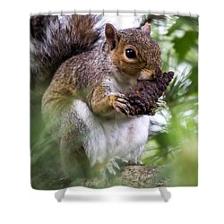 Squirrel With Pine Cone Shower Curtain