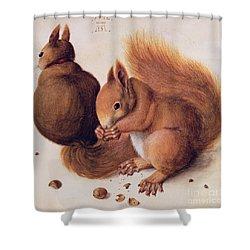 Squirrels Shower Curtain by Albrecht Duerer