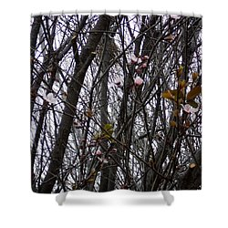 Spring Blossoms Shower Curtain by Carla Carson