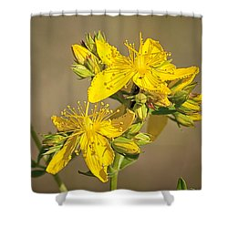 St Johns Wort Shower Curtain by Betty Depee