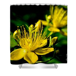 St John's Wort Shower Curtain