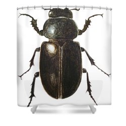 Stag Beetle Shower Curtain by Ele Grafton