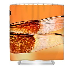 Stained Glass Shower Curtain by Mark Alder