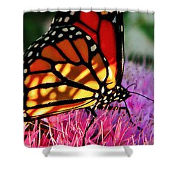 Stained Glass Monarch  Shower Curtain