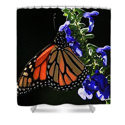 Stained Glass Wings Shower Curtain by Donna Kennedy