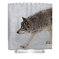 Shower Curtain featuring the photograph Stalker by Bianca Nadeau