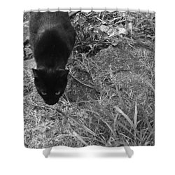 Stalking Cat Shower Curtain by Melinda Fawver