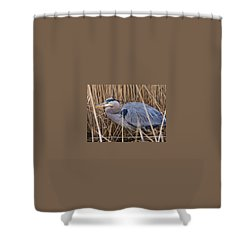Stalking Fish In The Reeds Shower Curtain by Allan Levin