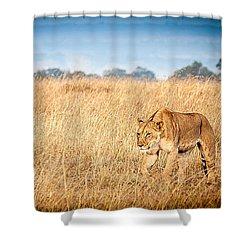 Stalking Lion Shower Curtain