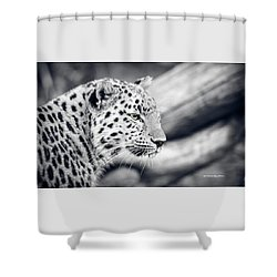Shower Curtain featuring the photograph Stalking Prey by Stwayne Keubrick