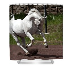 Stallion Shower Curtain by Wes and Dotty Weber