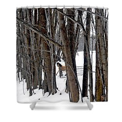 Stallion In The Woods Shower Curtain by Patricia Keller
