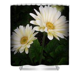 Stand By Me Gerber Daisy Shower Curtain