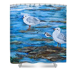 Sea Birds Wait Shower Curtain