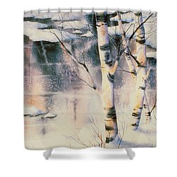 Stand Of Birch Shower Curtain