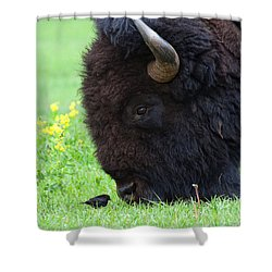 Stand Your Ground Shower Curtain by Jim Garrison