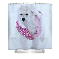 Standard Poodle In Winter Shower Curtain