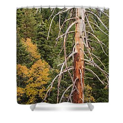 Standing Shower Curtain by Muhie Kanawati