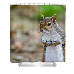 Standing Squirrel Shower Curtain by Matt Malloy