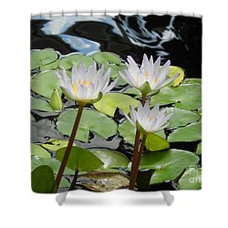 Shower Curtain featuring the photograph Standing Tall by Chrisann Ellis