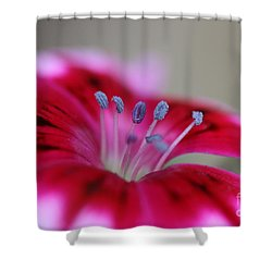Standing Tall Sweet William Shower Curtain