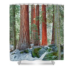Standing Tall - Sequoia National Park Shower Curtain by Sandra Bronstein