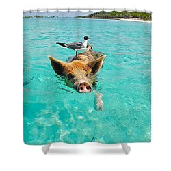 Staniel Cay Swimming Pig Seagull Fish Exumas Shower Curtain