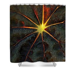 Star Bright Shower Curtain by Sabrina L Ryan