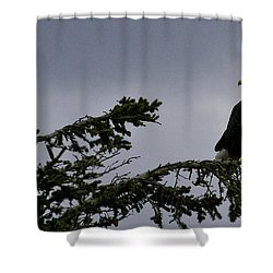 Shower Curtain featuring the photograph Stare Down by Betty Depee