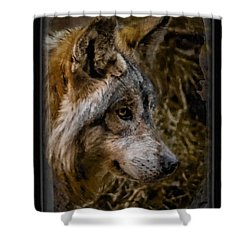 Stare Of The Wolf Shower Curtain by Ernie Echols