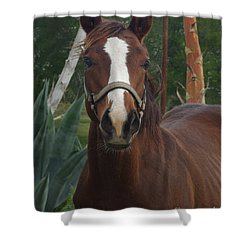 Shower Curtain featuring the photograph Stared Down by Peter Piatt
