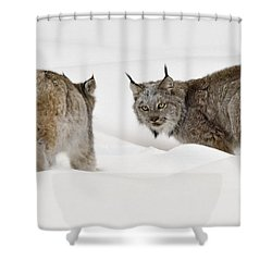 Staredown Shower Curtain by Dee Cresswell