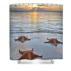 Shower Curtain featuring the photograph Starfish Beach Sunset by Adam Romanowicz