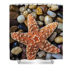Starfish On Rocks Shower Curtain by Garry Gay