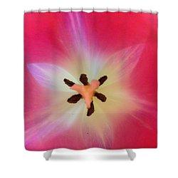 Starfish Tulip Shower Curtain