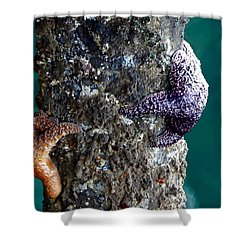 Starfish Under The Pier Shower Curtain by Kathy Churchman