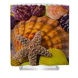 Starfish With Seashells Shower Curtain by Garry Gay
