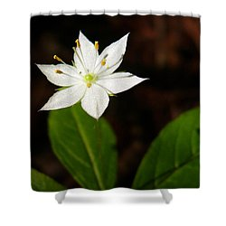 Starflower Shower Curtain by Christina Rollo