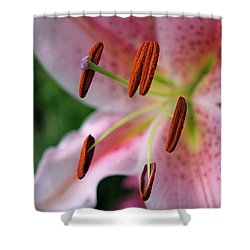 Stargazer Shower Curtain by Rona Black