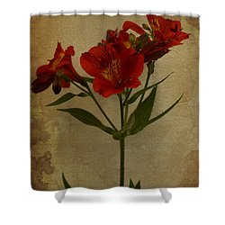 Stargazers On Paper Shower Curtain by Marco Oliveira