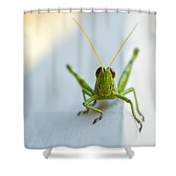 Staring At Me Shower Curtain by Shelby  Young