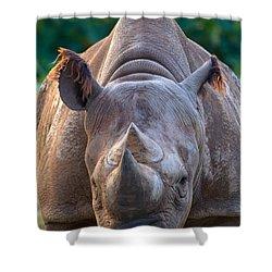 Staring Down Rhino Shower Curtain