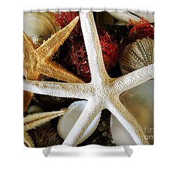 Stars Of The Sea Shower Curtain by Colleen Kammerer